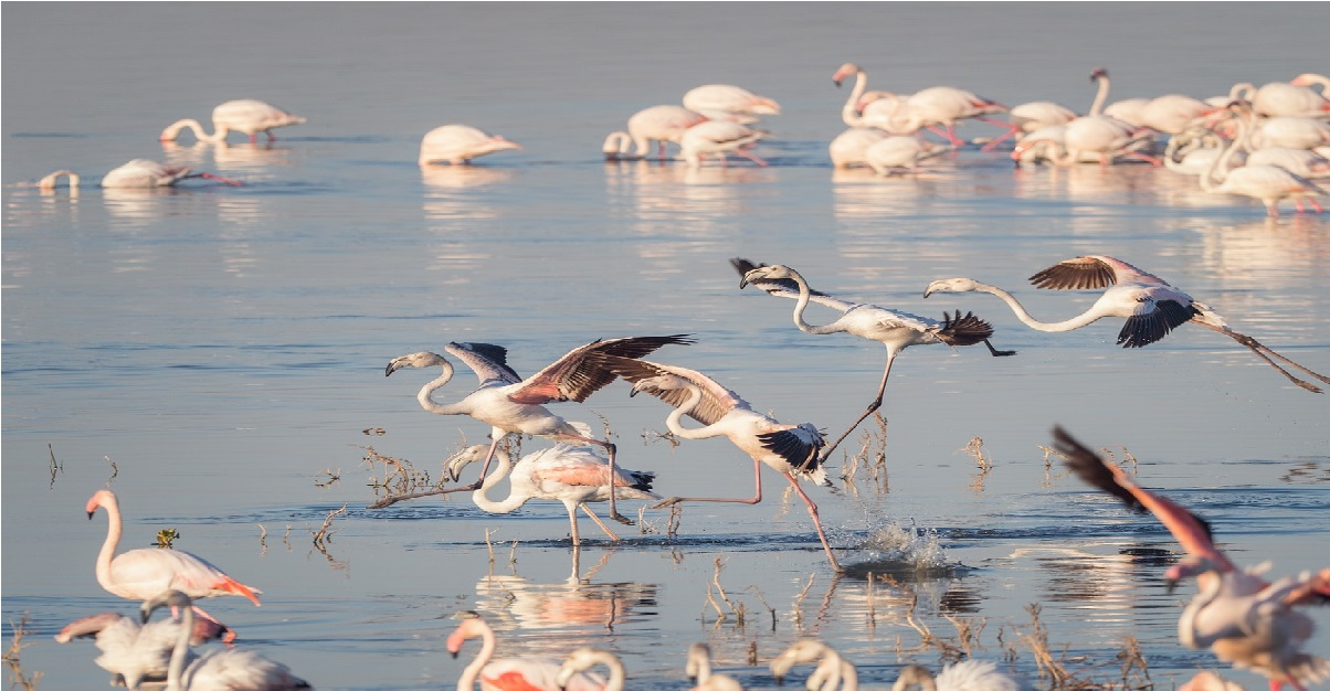 flock of pellicans and flamingoes in lucid dreaming