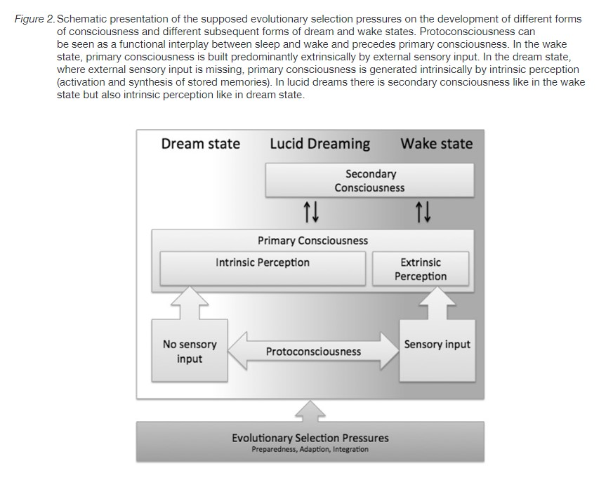 illustration in a research about lucid dreaming