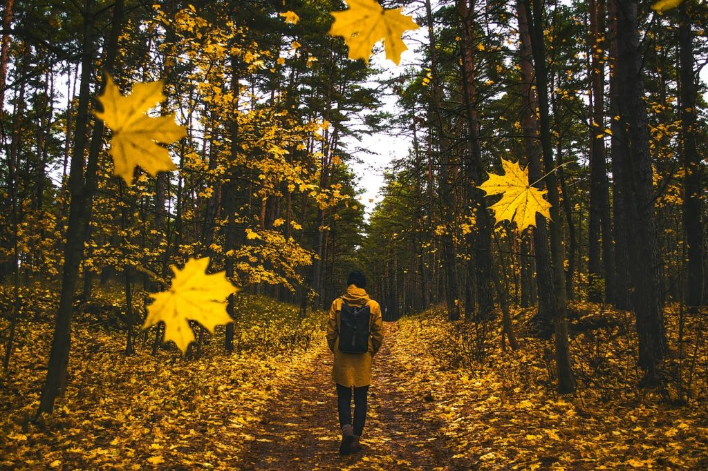man under yellow trees in lucid dreaming