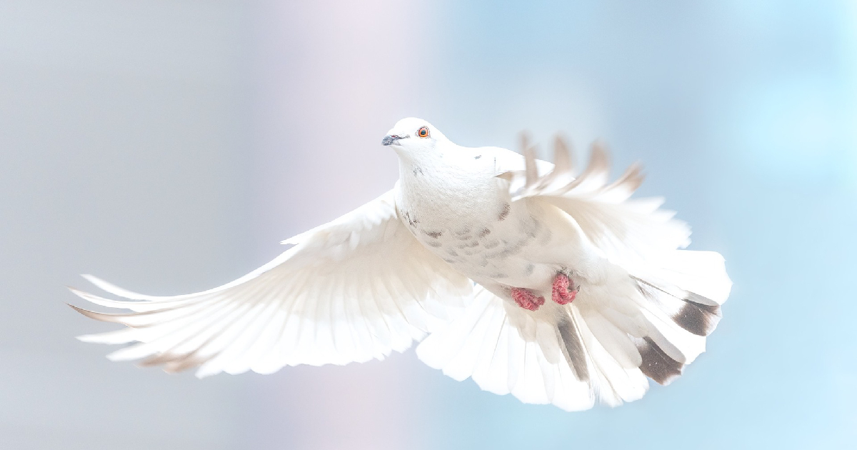 white dove in lucid dreaming