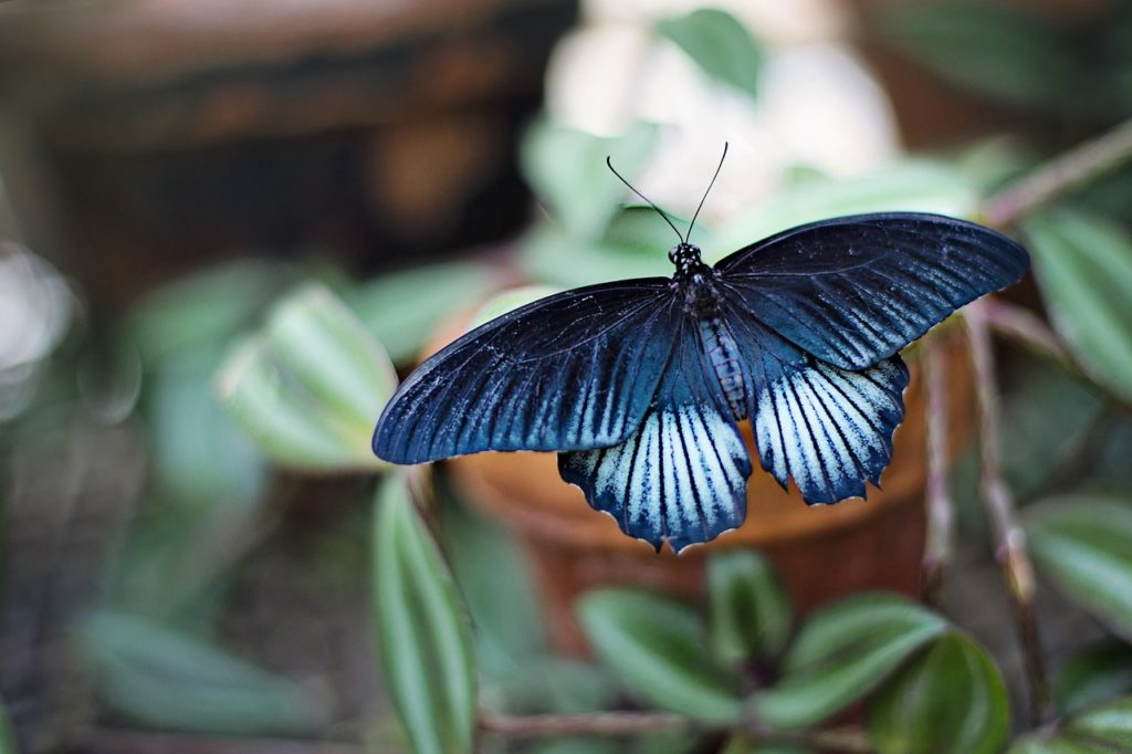butterfly in lucid dreaming